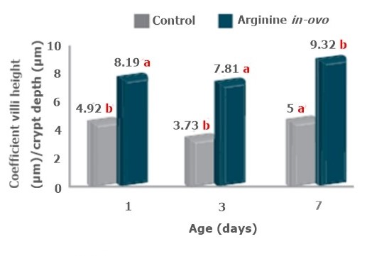 effect of in-ovo arg on villi height to crypt height