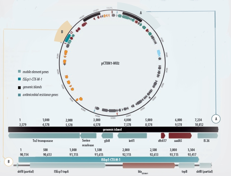 Genomic map of a plasmid coding for AMR against ESC in Ecoli