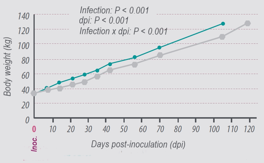 Effect-on-infection-dpi-and-their-interactions-on-BW