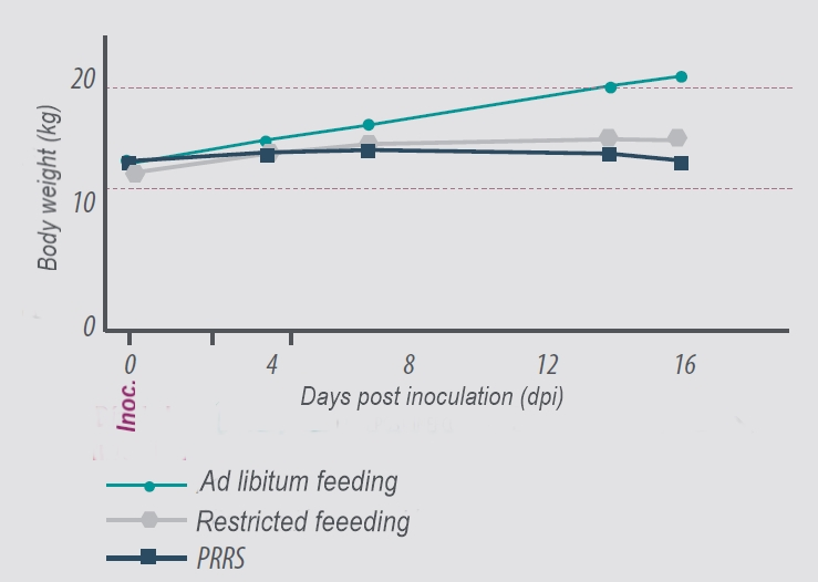 PRRS-effect-of-feeding-on-BW