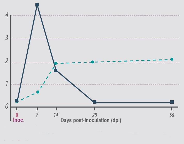 PRRS pig performance_Viremia-and-antibodies-after-innolulation-with-PRRS-virus-with-line